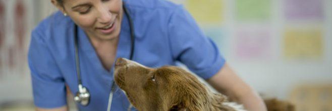 GVC - Global Veterinary Careers